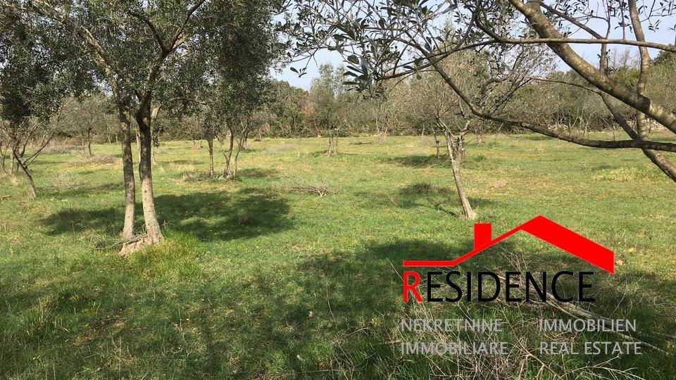 Land, 7055 m2, For Sale, Vodnjan - Galižana