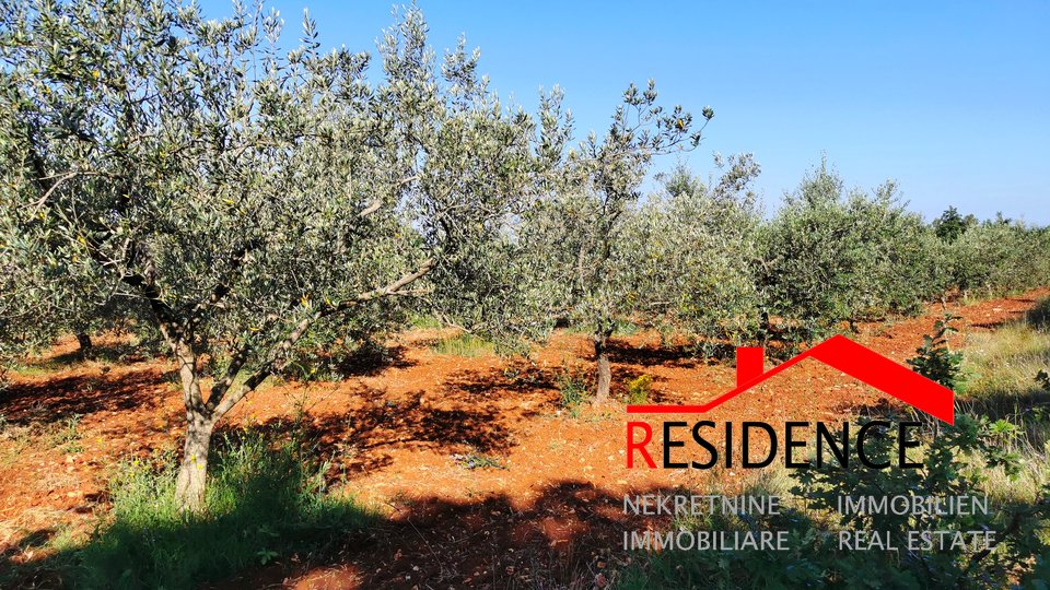 Land, 11400 m2, For Sale, Bale